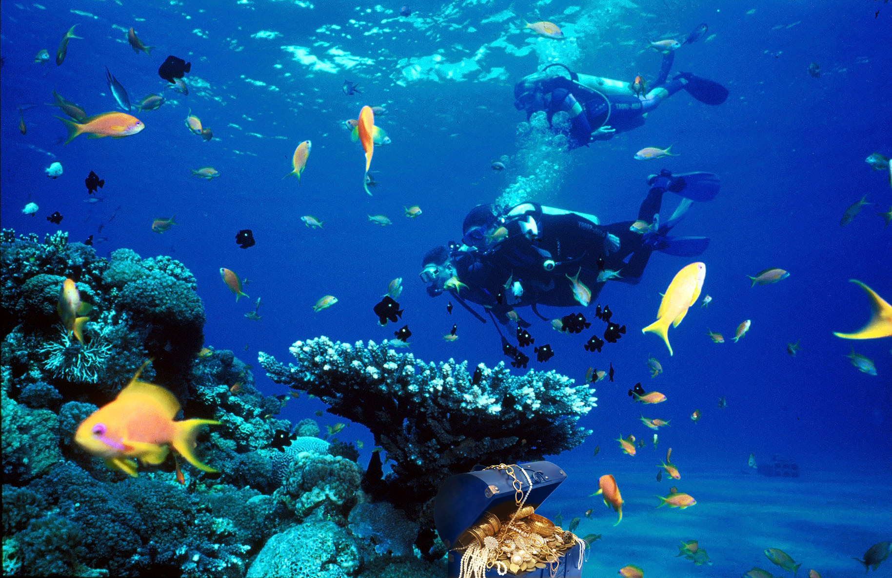 What does a Marine Biologist do?